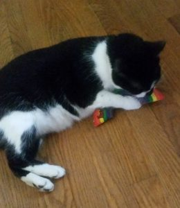 Zoli and His Yeowww Cat Nip Rainbow